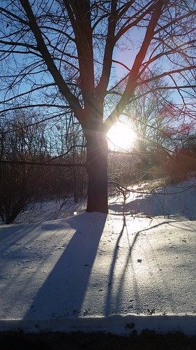 Winter in New England #snow #sun #mapletree - Lapdog Creations