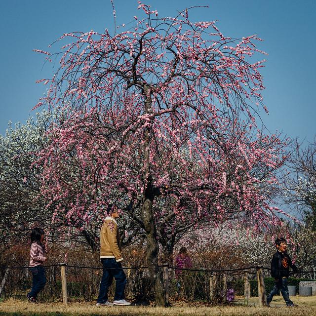 Hirashiba-Park_12