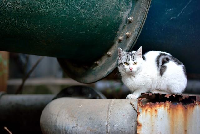 廃墟のような場所で身構えるネコの写真