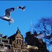 Herring gulls Princes St by Philip Percival