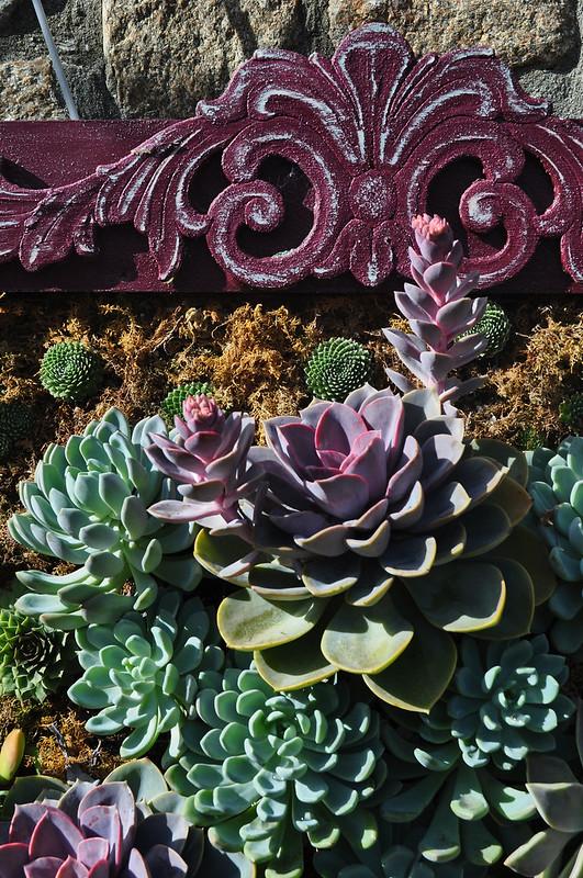 Succulent Picture Frames (7)