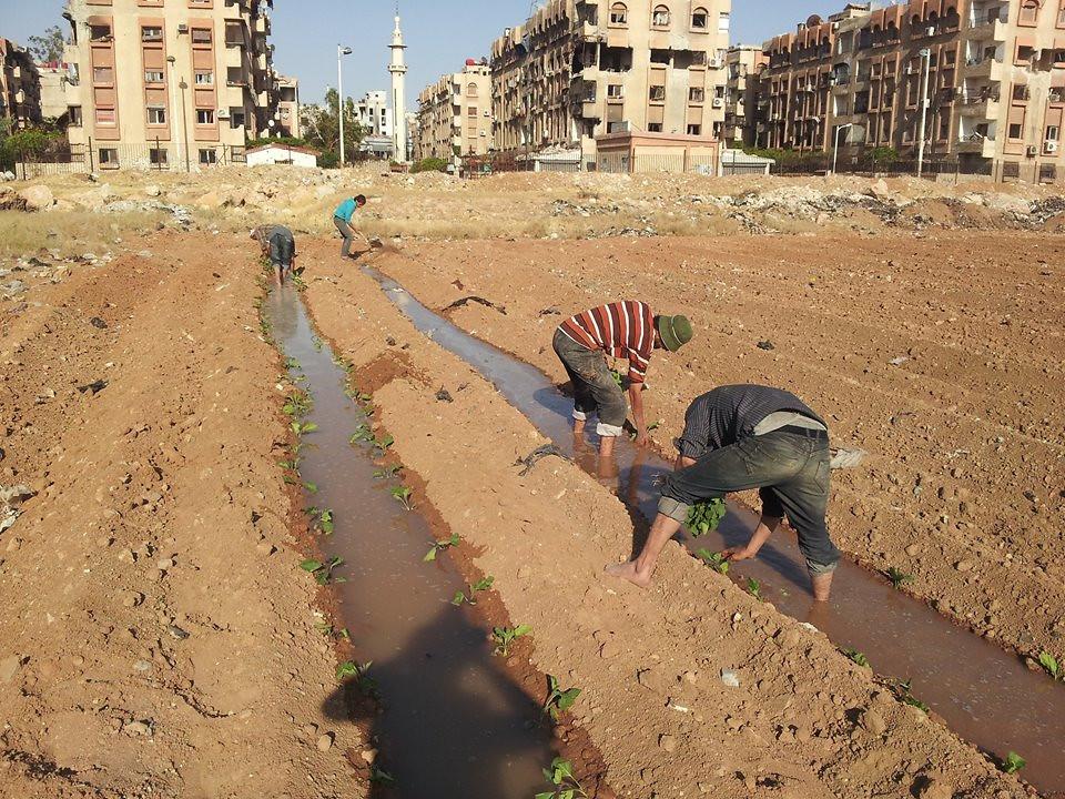 Suppe#3 Gärten in Syrien