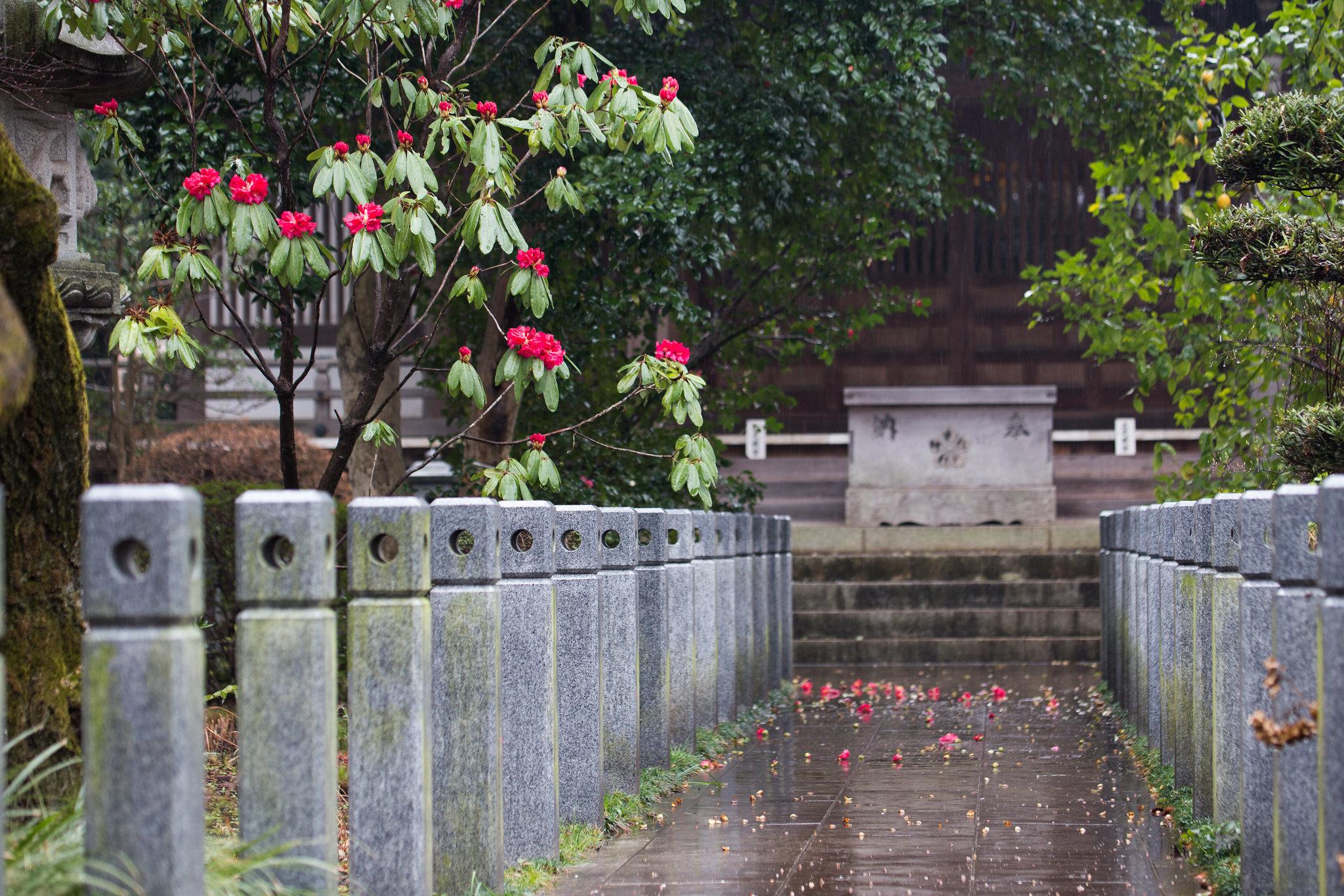 2016-03-19 桜 001-2