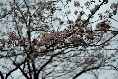 Sakura pink (Custom White Balance)