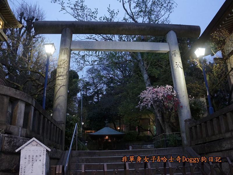 日本東京上野恩賜公園櫻花19