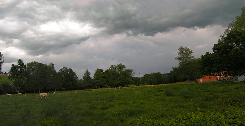 20080511 20998 0901 Jakobus Wiese Kühe grau Wolken_P01