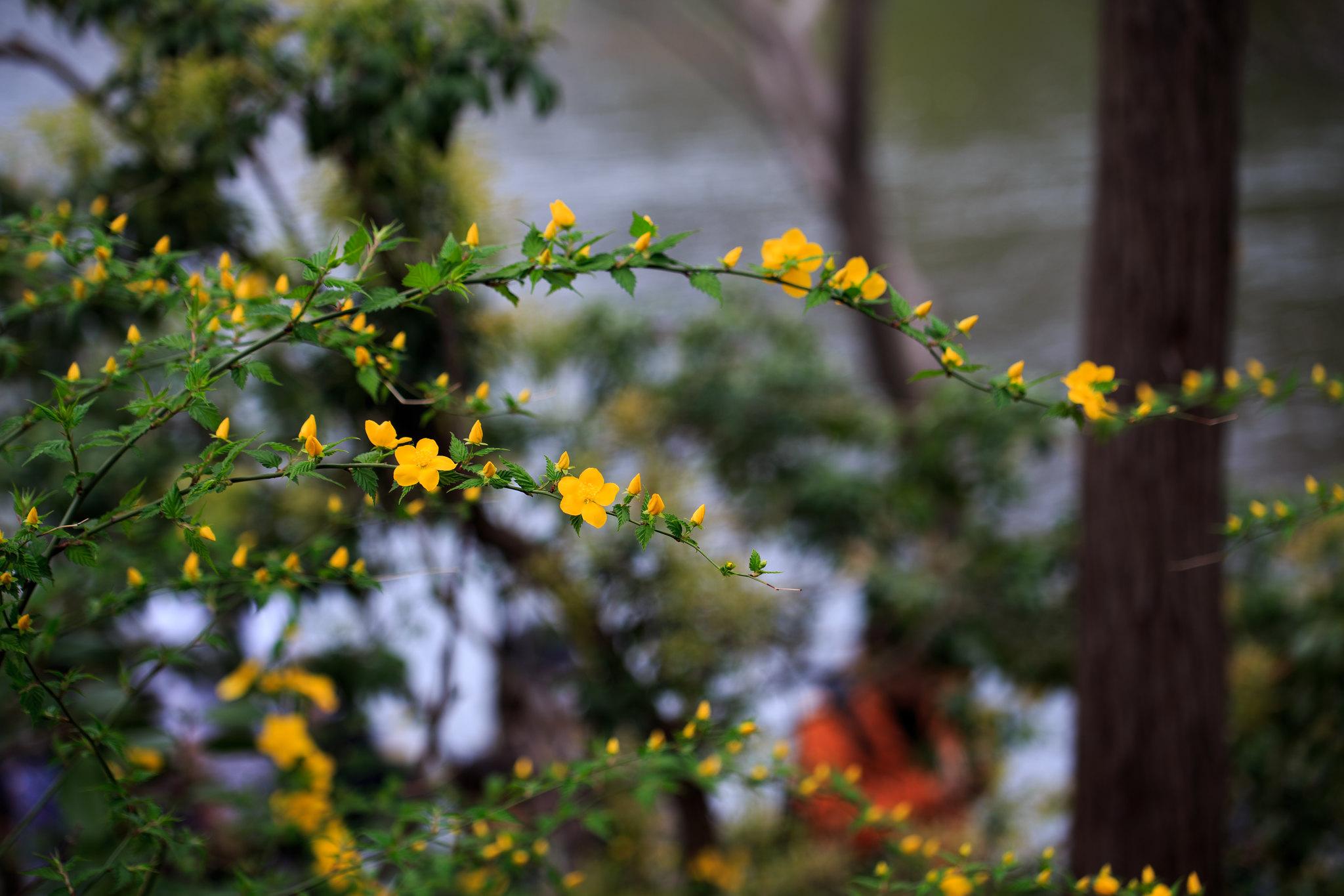 2016-04-01 井の頭公園 001-4