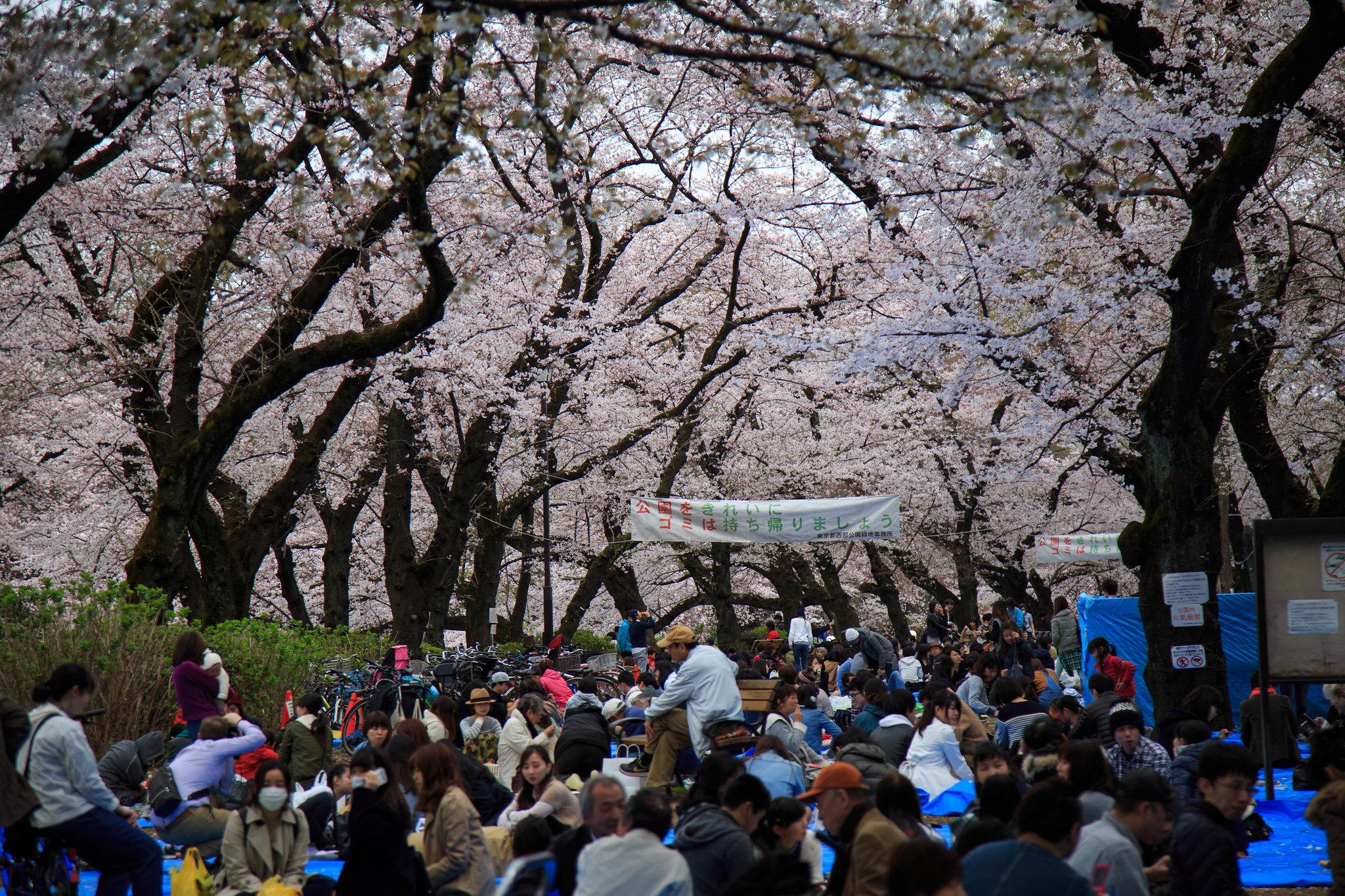 2016-04-01 井の頭公園 001-3