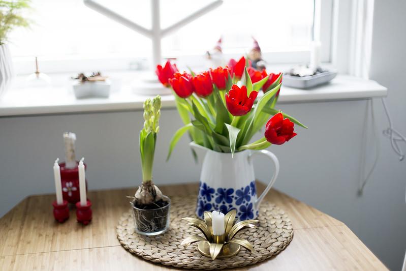 röda tulpaner