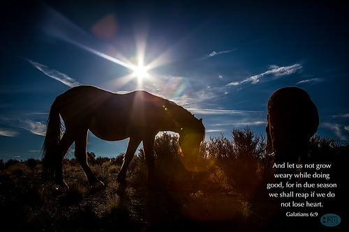 horses sunrise lasvegas earlymorning coldcreek