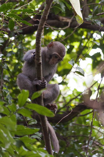 高雄柴山的猴子 Kaohsiung, Taiwan Monkeys