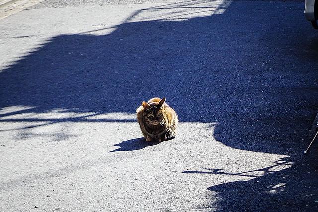 Today's Cat@2016-02-13