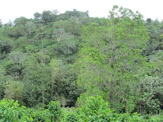 Moises Velez-Santiago's mixed hardwood trees