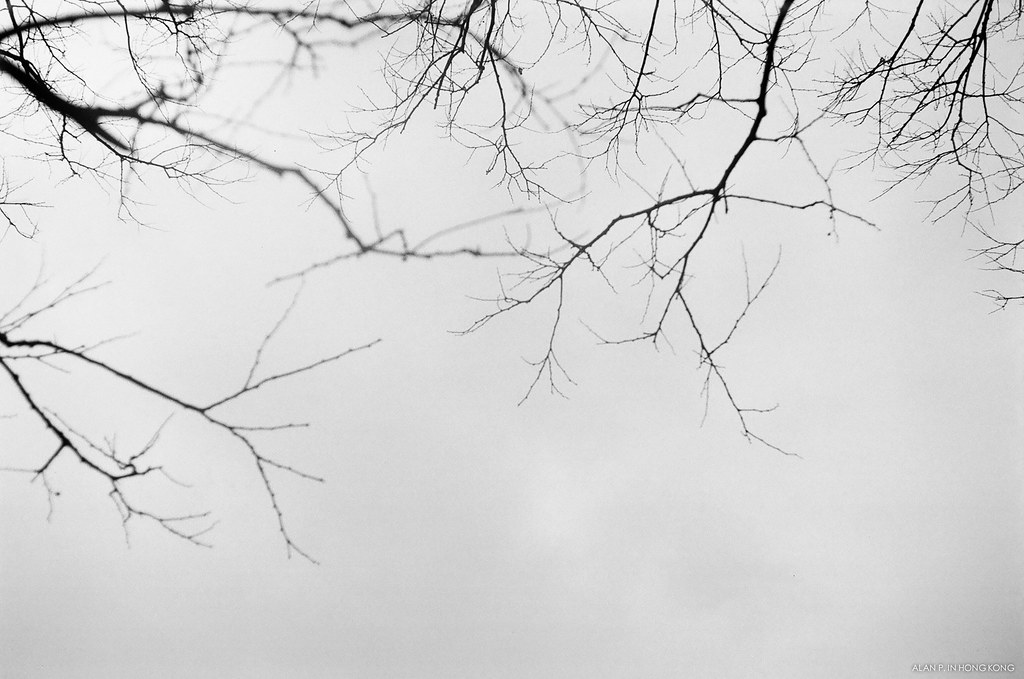 Leafless