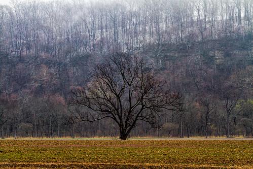 Tree along the bluffs