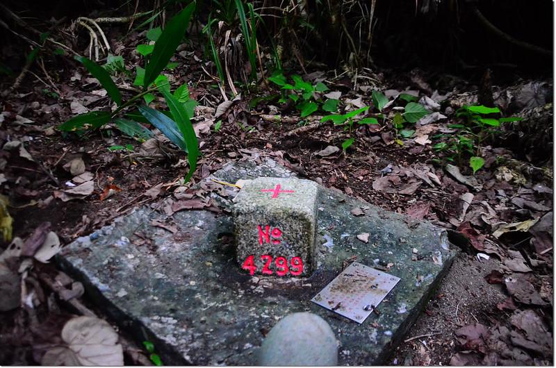 大尖石三等三角點(# 4299 Elev. 11 m) 1