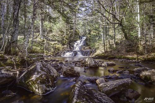 trees waterfall rocks brook