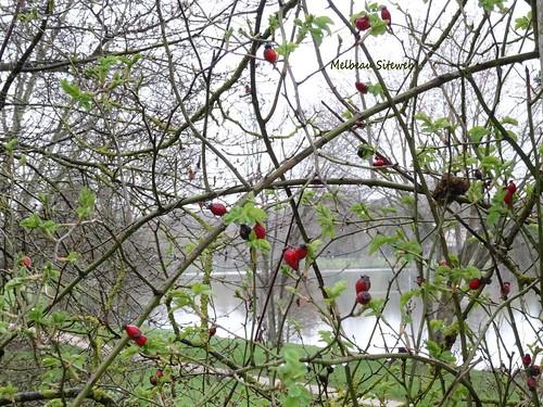 Balade nature : D'eau, de flaques & de gadoue