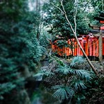 Fushimi-Inari through new eyes