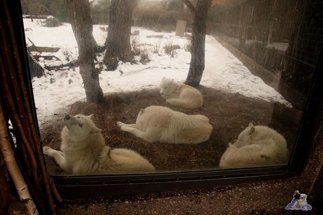 Zoo Berlin 08.01.2015  027