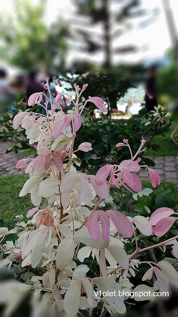 20150616_151543 flower2brw