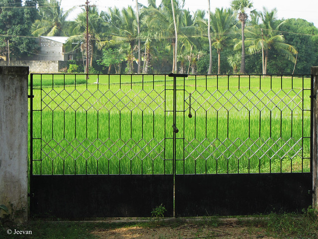 Gated Field