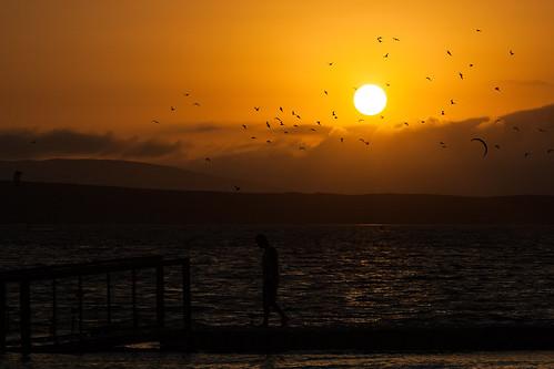 sunset sun cars birds animals desert desierto silueta siluette paracas perú