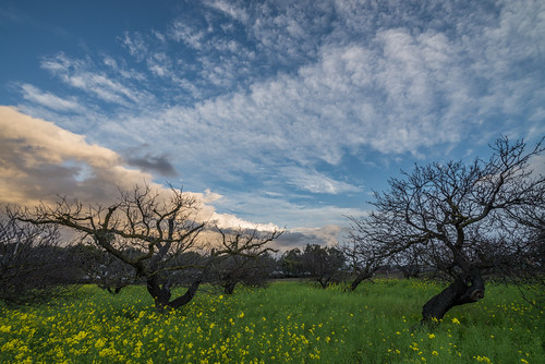 Spring in the Dormant Orchard