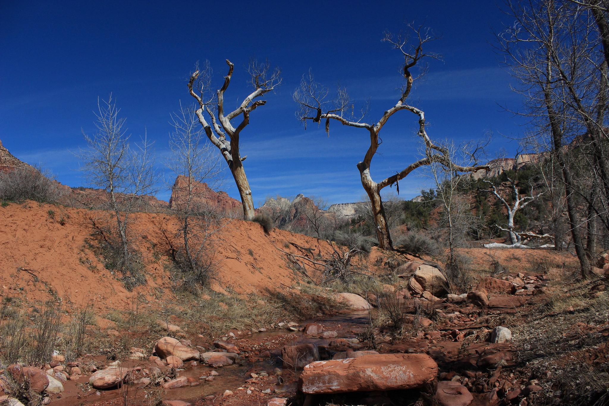 Zion Desert
