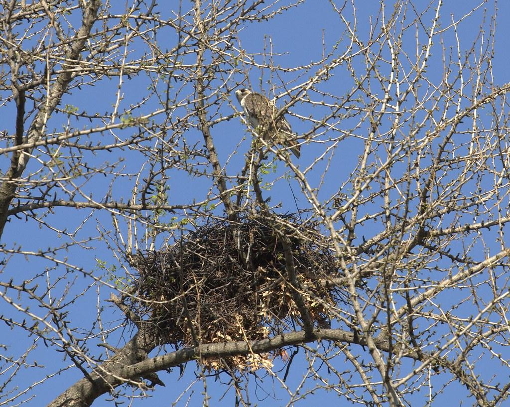 Christo guards the nest