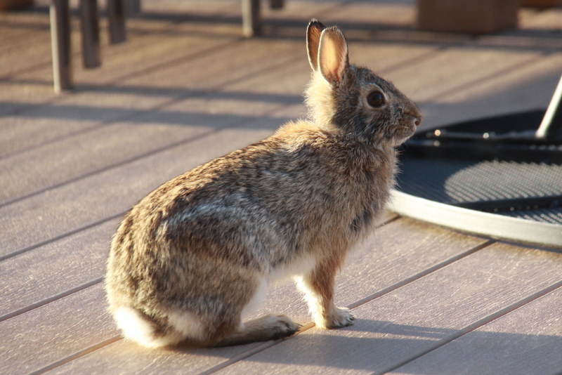 bunny on deck (3)