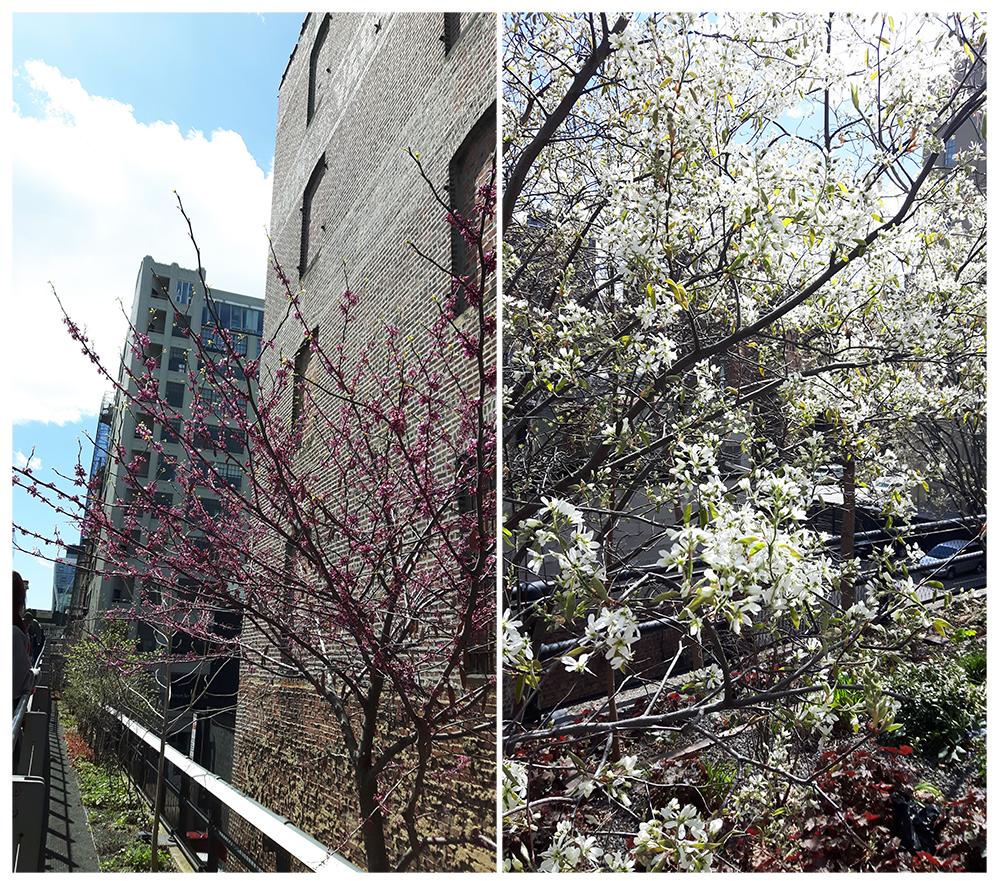 highline-blossoms