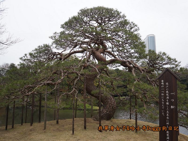 日本自由行小石川後樂園&東京巨蛋城16