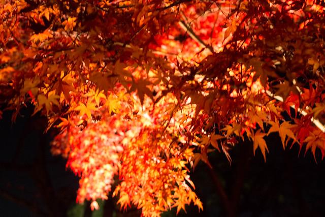 20141122-武奈ヶ岳&京都ライトアップ-0853.jpg
