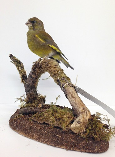 Greenfinch base