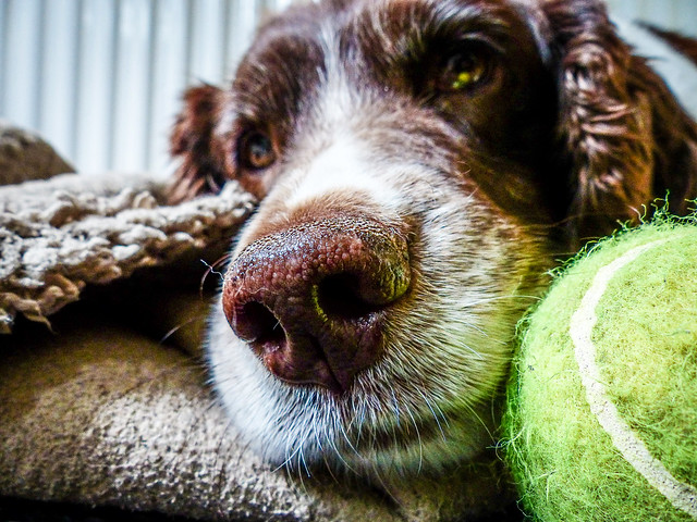The dog the ball...dropping hints !