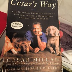#bookaday #bestbook on #thedog #dogbible #cesarmilan #itsforthedogs