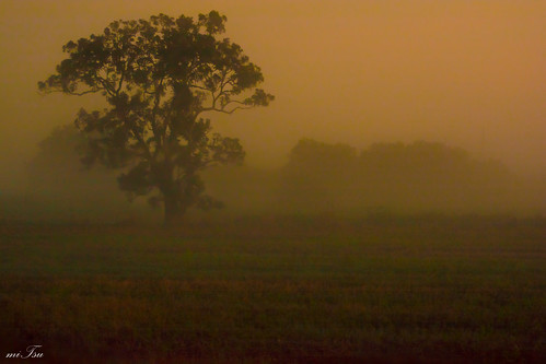 morning fog sunrise woodland landscape dawn nikon trinidad nikkor 70300mm d5200