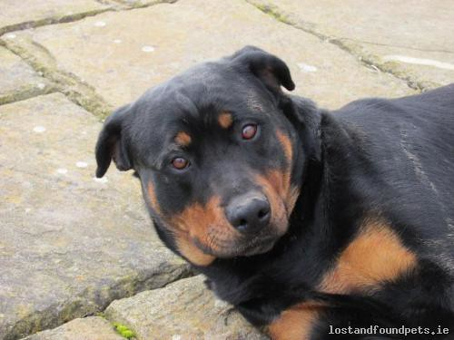 [Reunited] Sun, Jan 31st, 2016 Lost Female Dog - Edenderry - Highfield - Carrick, Edenderry - Highfield, Kildare