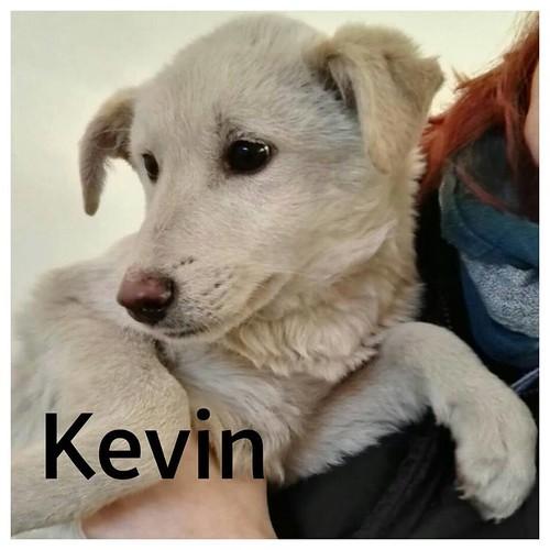rubrica animali - Kevin