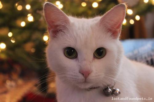 Tue, Jan 26th, 2016 Lost Female Cat - Trim Road, R154, Meath