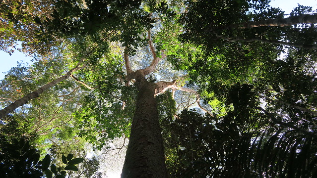 tree canopy amazon rrainforest breath taking