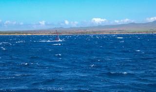 Maui Boardsailing