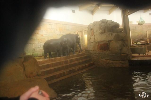 Wasserspaß für Tonja+Wolodja Tierpark 06.03.201650