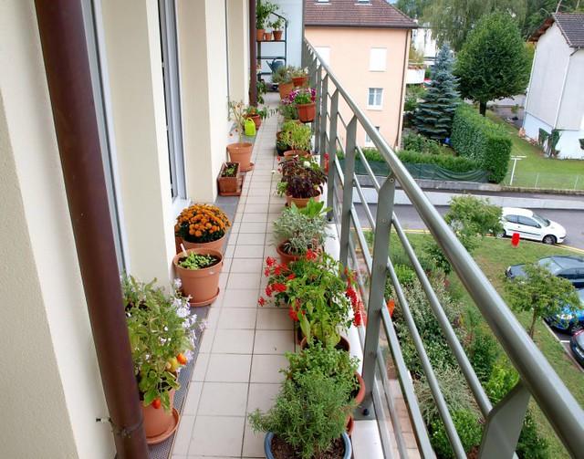 Convierte Tu Terraza En Un Hermoso Jardín Con Estos 7