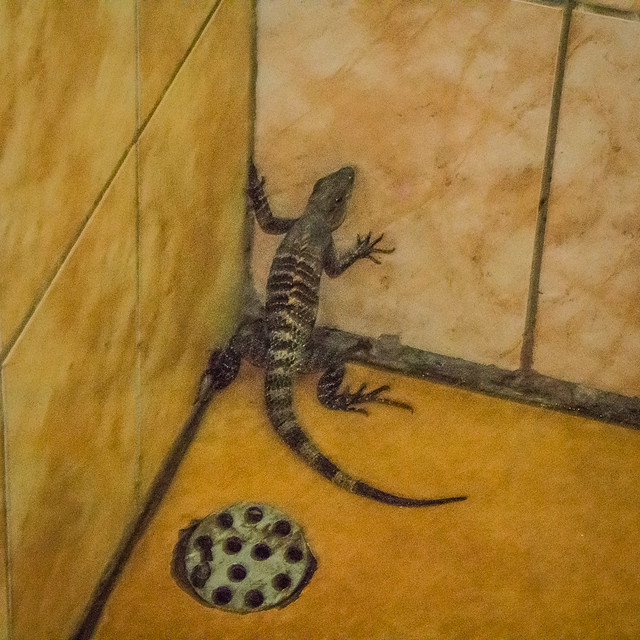iguana in shower