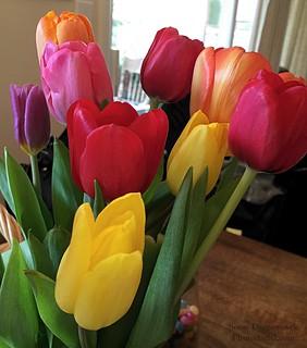 20160319 - 9 Tulips