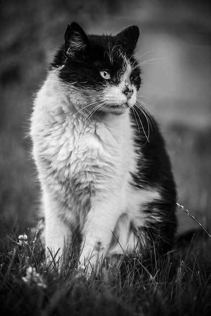 Jimmi the Cat - Zulte, Belgium