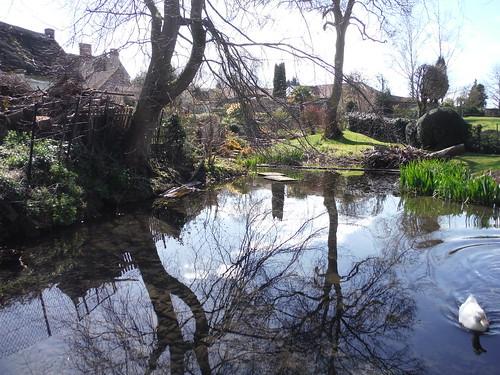 Pond in Cuddington