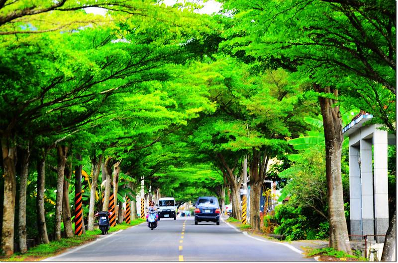 美濃廣興街(高106鄉道)綠色隧道 3